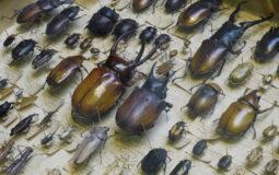 Mr Bowdler's Beetles by Stephen Irwin