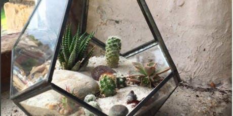 Cacti Terrarium Making Workshop Blackburn Museum